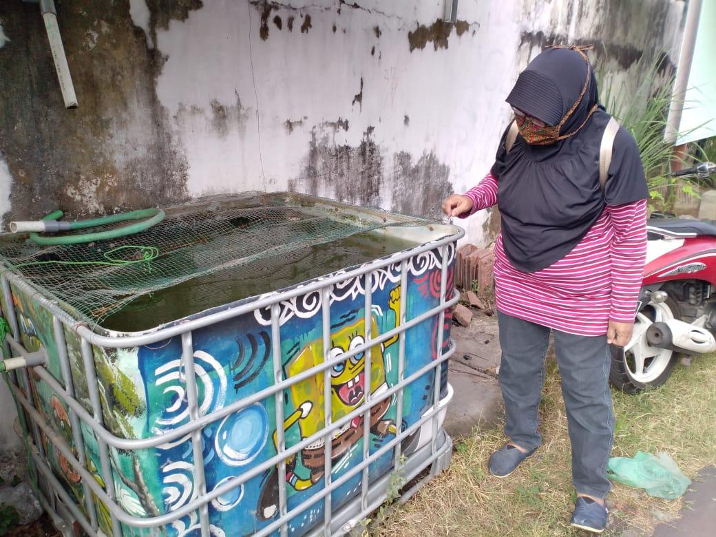 Budidaya Lele cendol di wilayah Balirejo